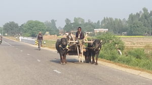 A much slower pace in western Nepal.