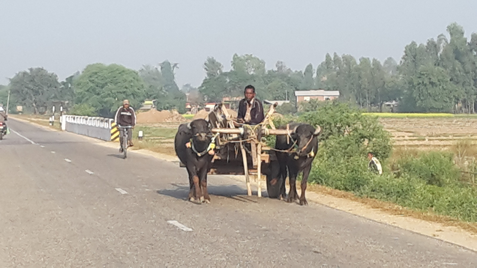 Ox and cart