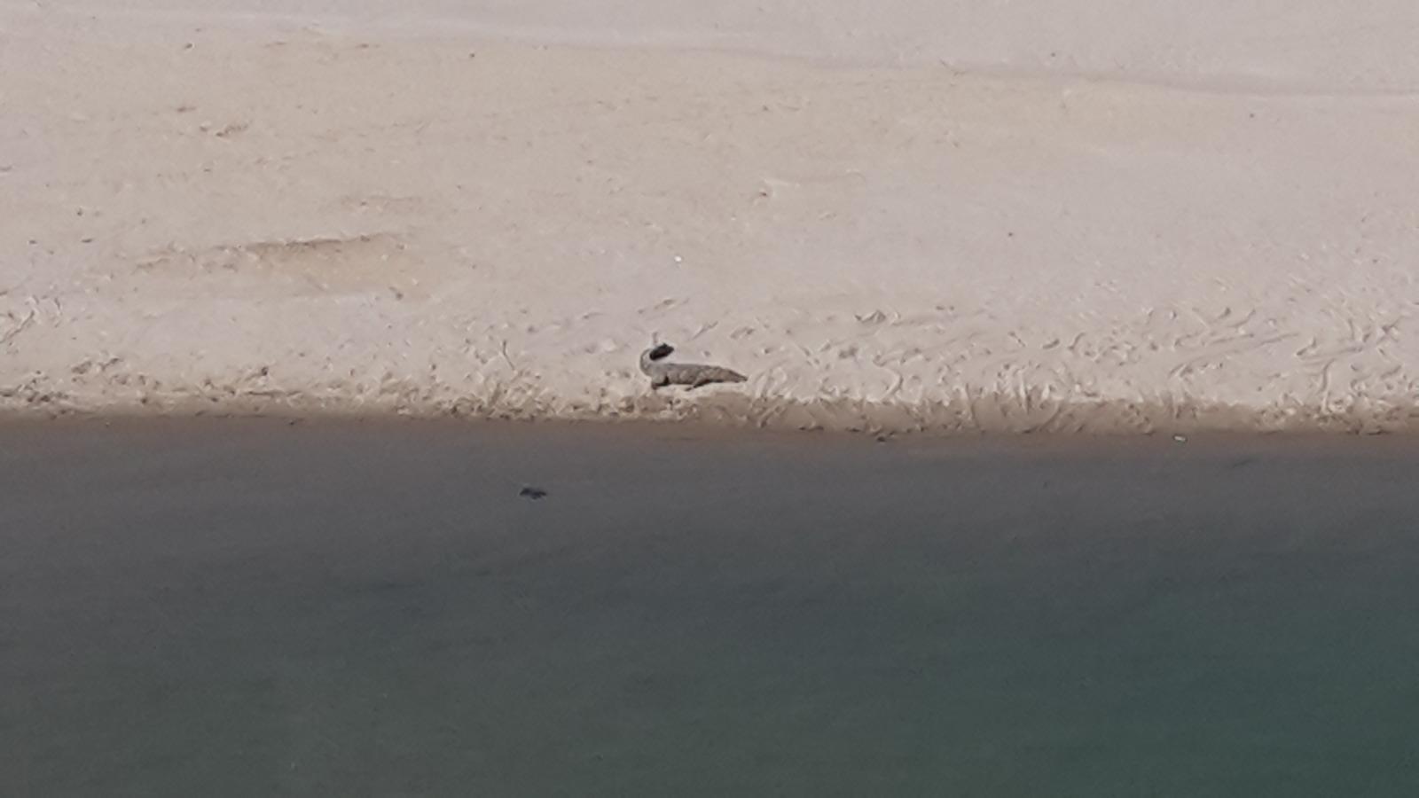 Crocodile by a river