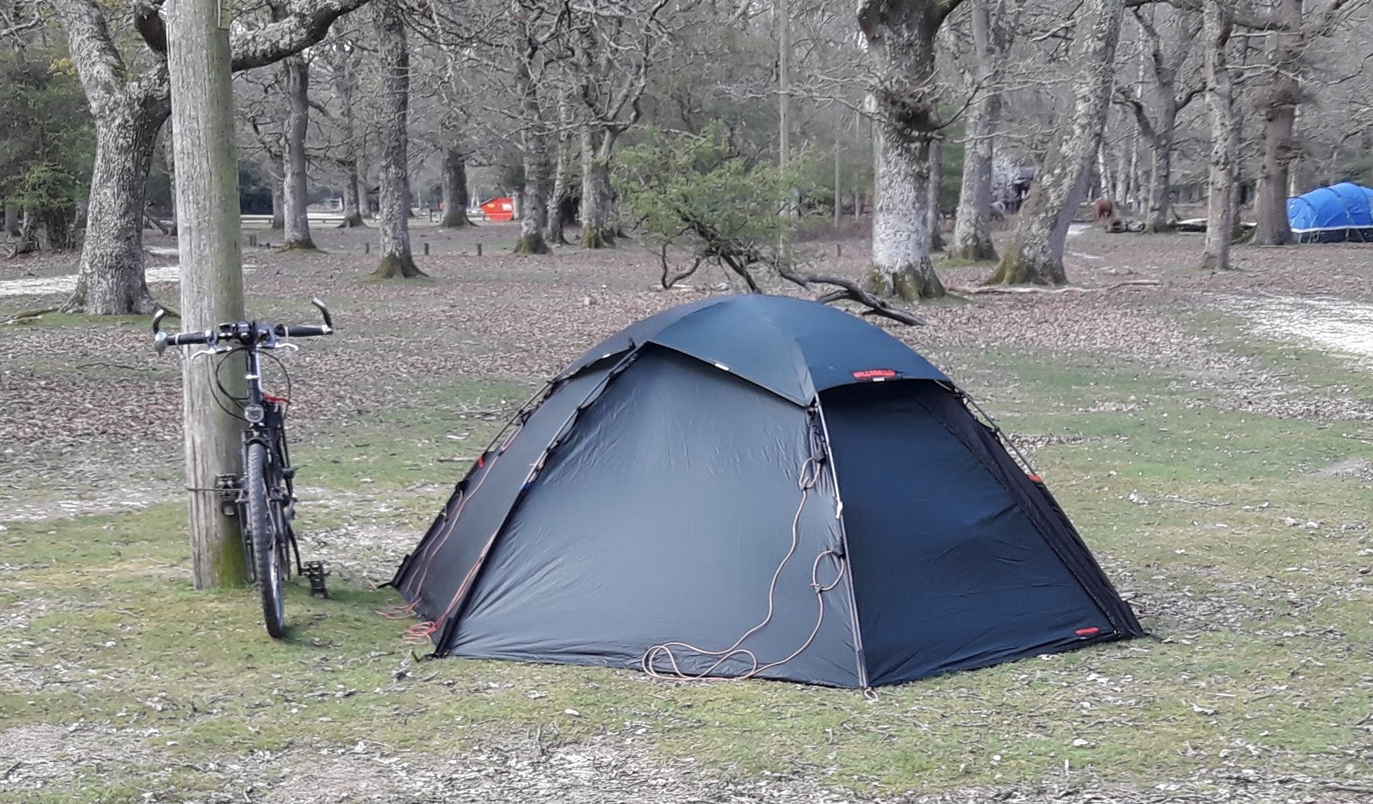 Tent forest
