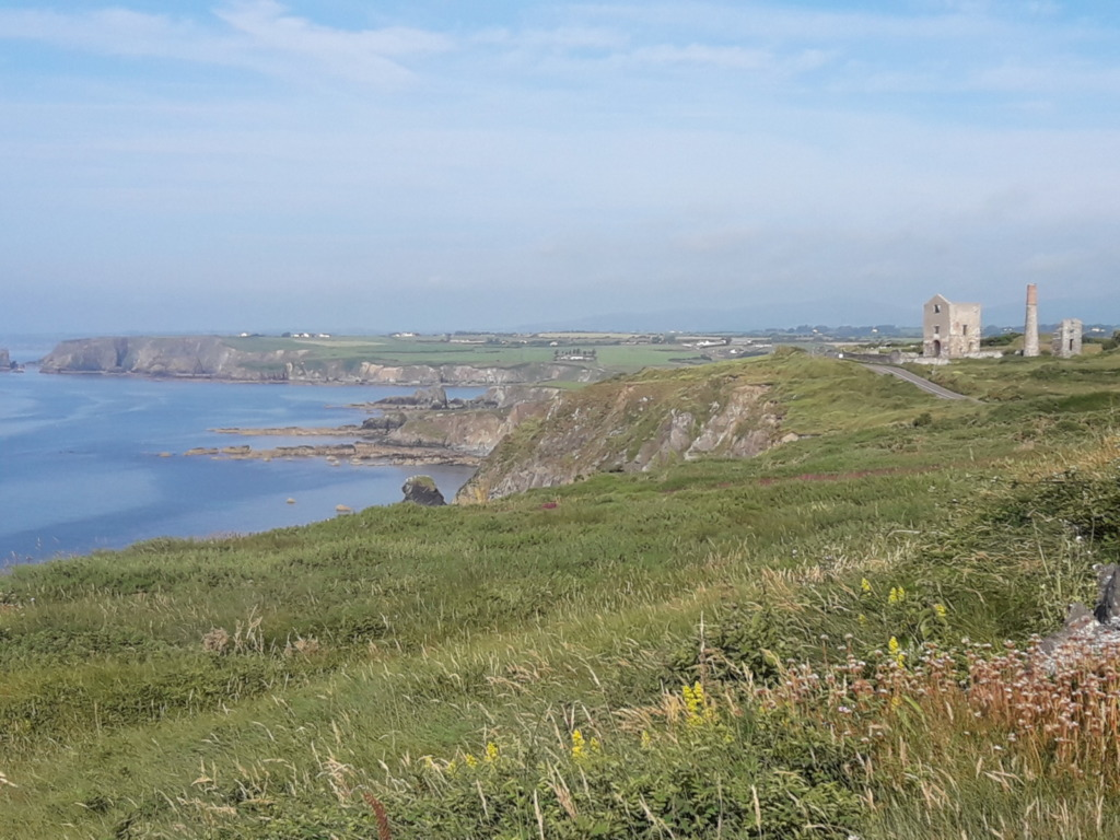 Grass sea Ireland July 2019