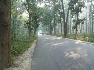 The woods coming out of Gorakhpur, Uttar Pradesh