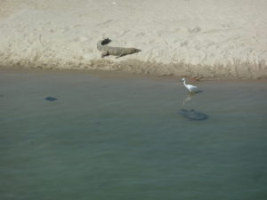 Crocodile, turtle and a bird in the Bardia national park